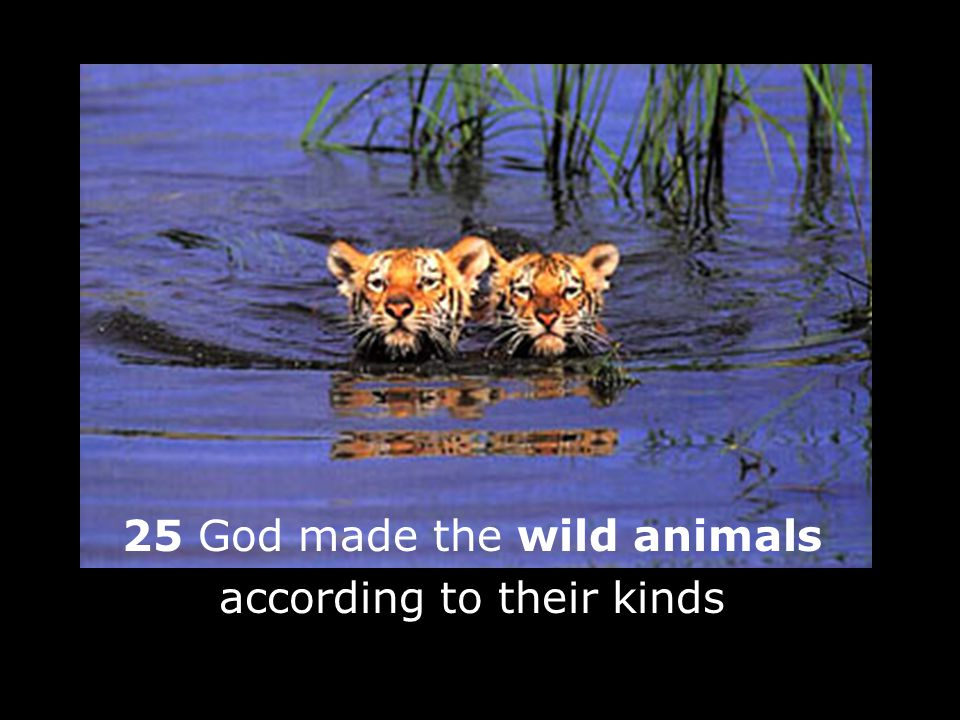 25 God made the wild animals according to their kinds 1