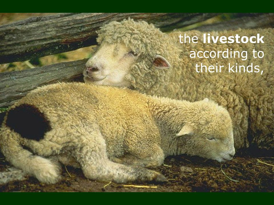 the livestock according to their kinds,