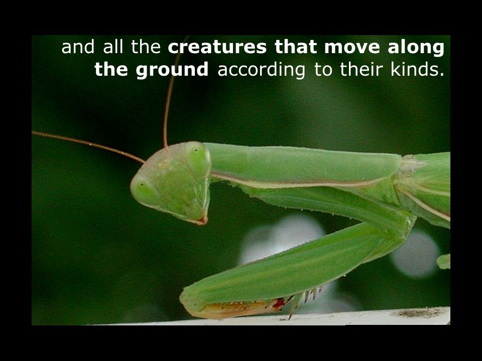 and all the creatures that move along the ground according to their kinds.