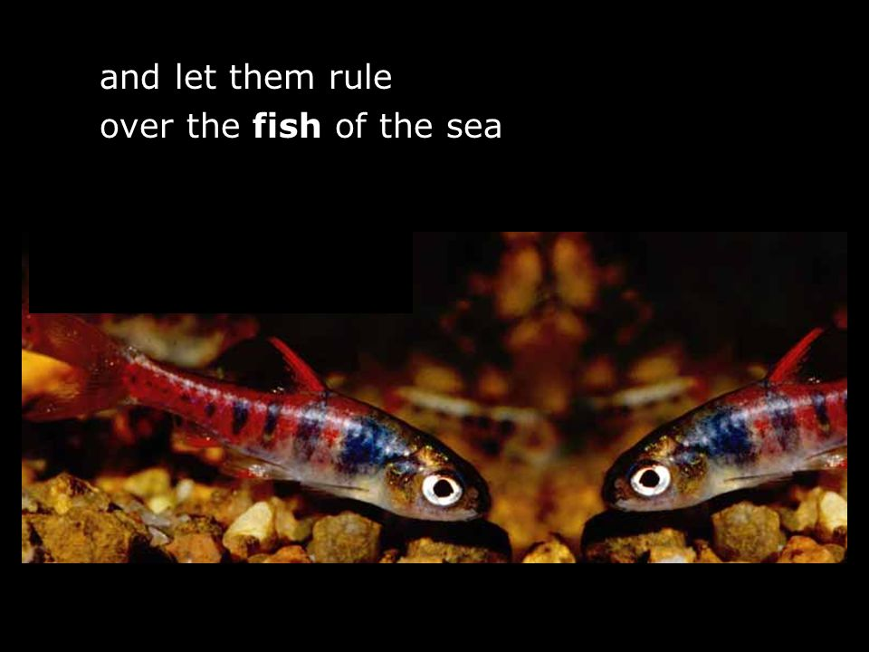 and let them rule over the fish of the sea f