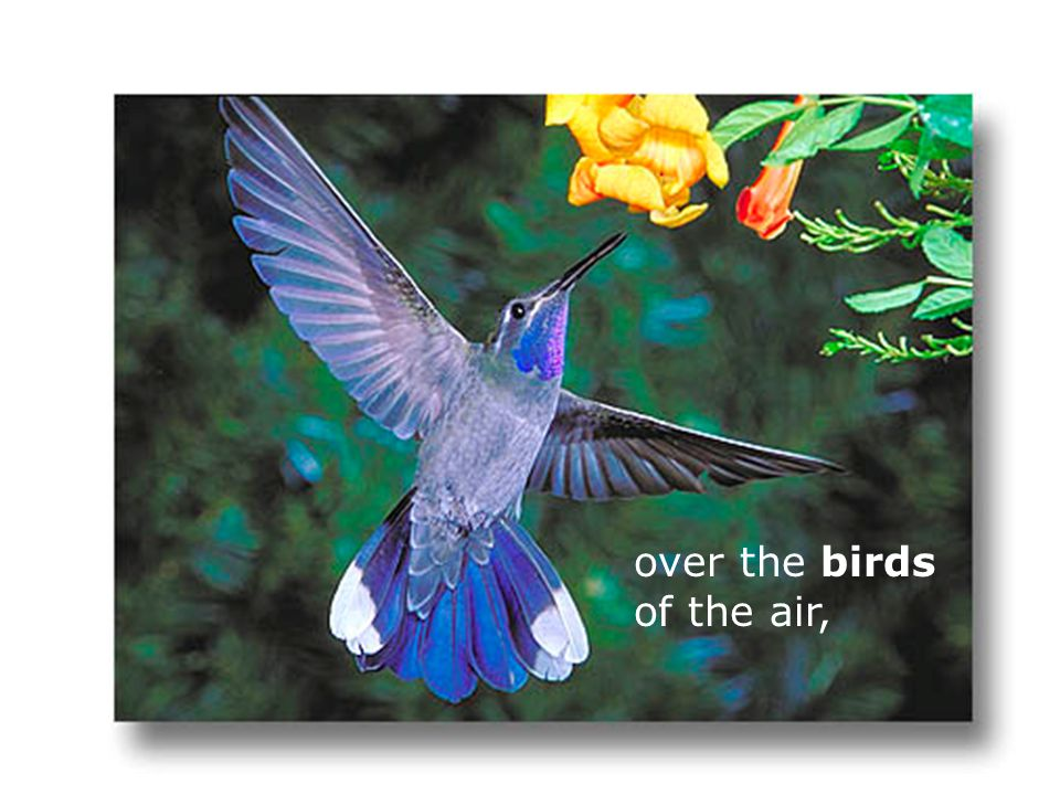 over the birds of the air,