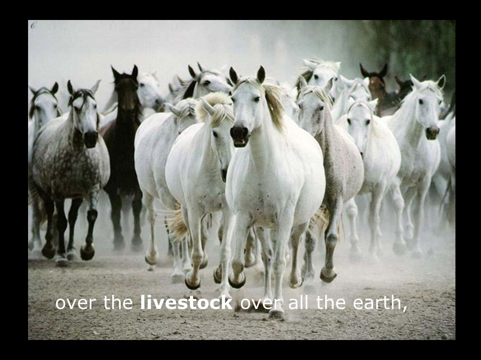 over the livestock over all the earth,