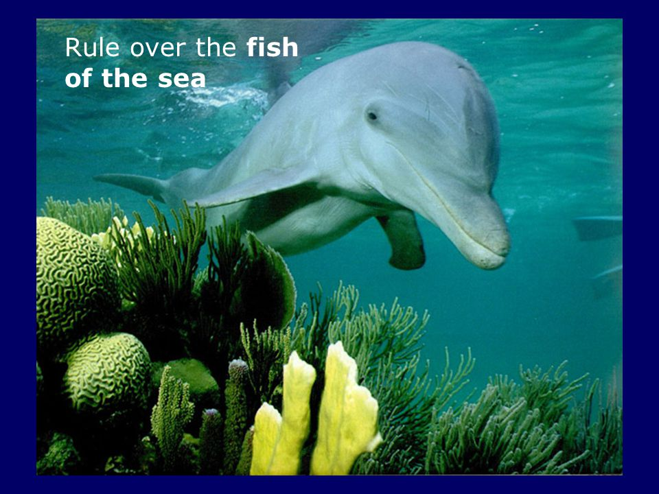 Rule over the fish of the sea