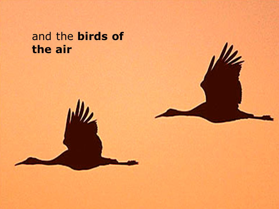 and the birds of the air