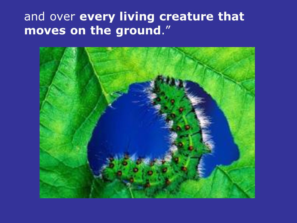 and over every living creature that moves on the ground.