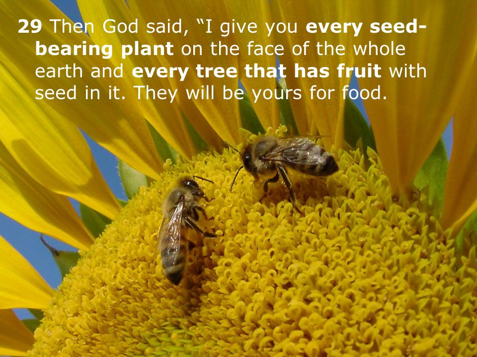 29 Then God said, I give you every seed-bearing plant on the face of the whole earth and every tree that has fruit with seed in it.