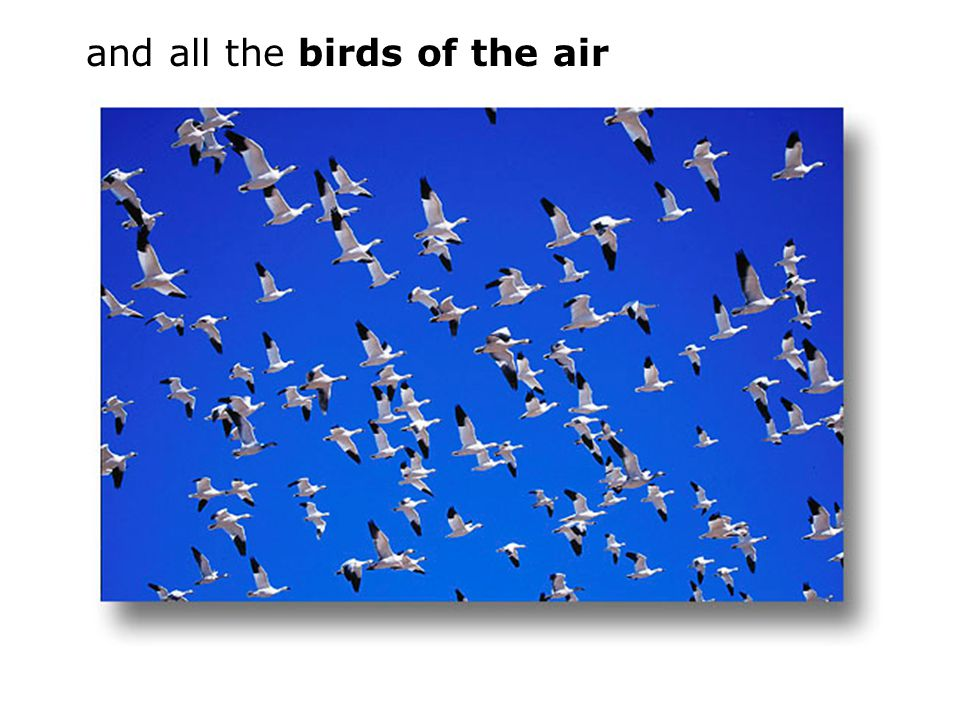 and all the birds of the air