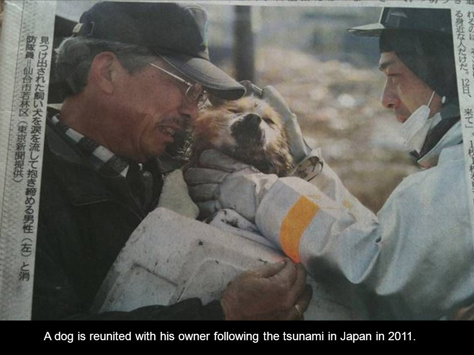 A dog is reunited with his owner following the tsunami in Japan in 2011.