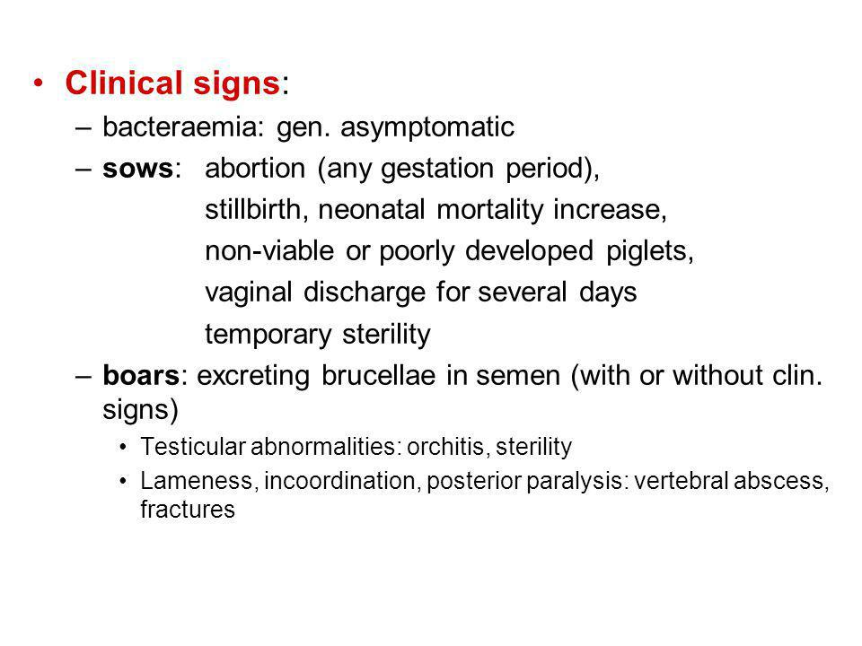 Clinical signs: bacteraemia: gen. asymptomatic