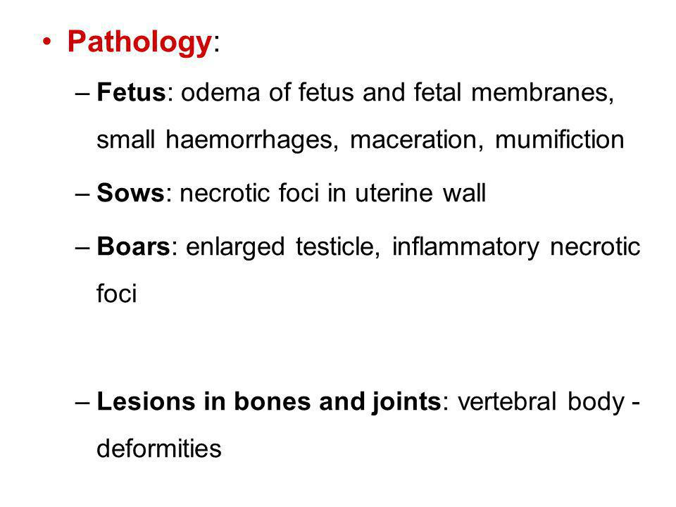 Pathology: Fetus: odema of fetus and fetal membranes, small haemorrhages, maceration, mumifiction. Sows: necrotic foci in uterine wall.