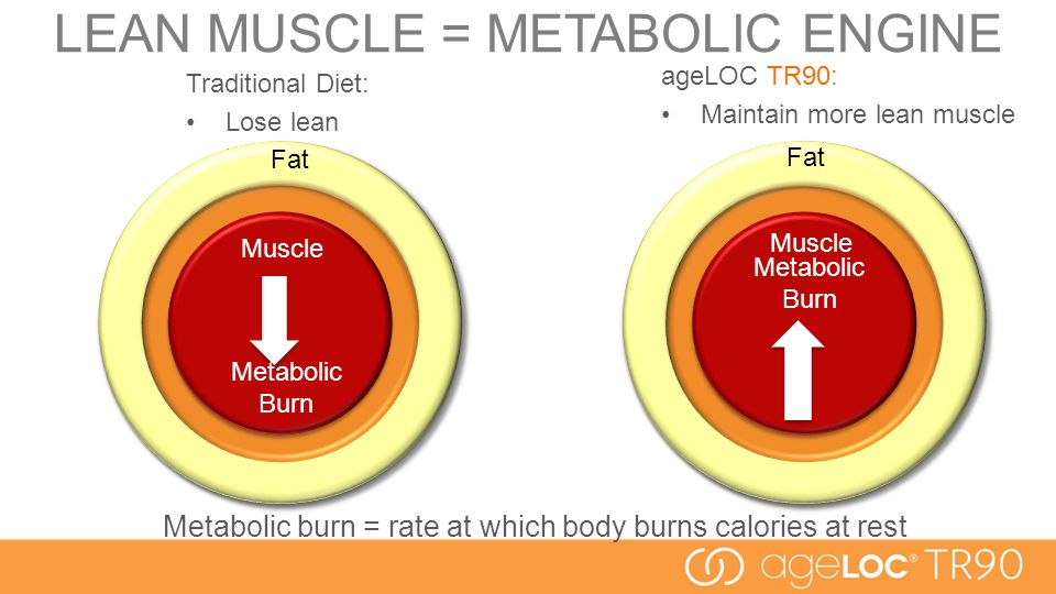 LEAN MUSCLE = METABOLIC ENGINE