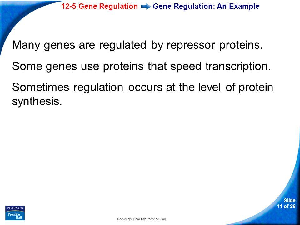 Gene Regulation: An Example
