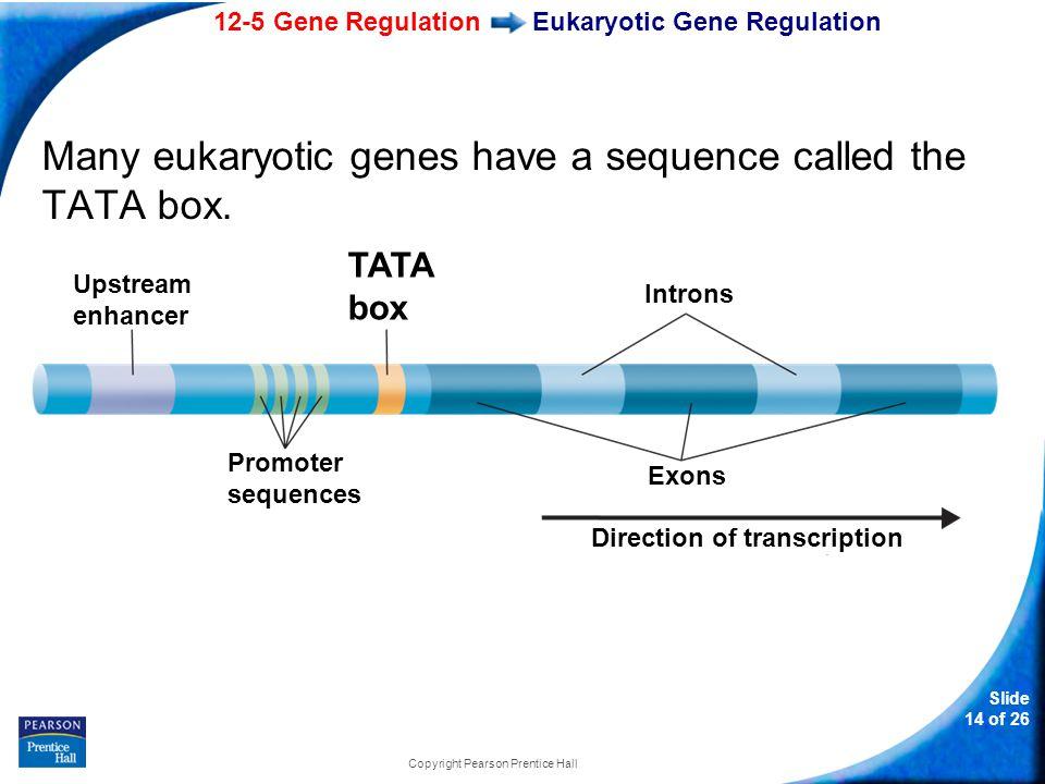 Eukaryotic Gene Regulation