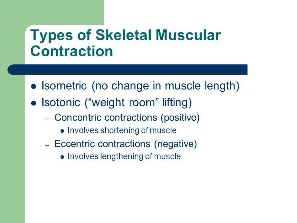 Types of Skeletal Muscular Contraction