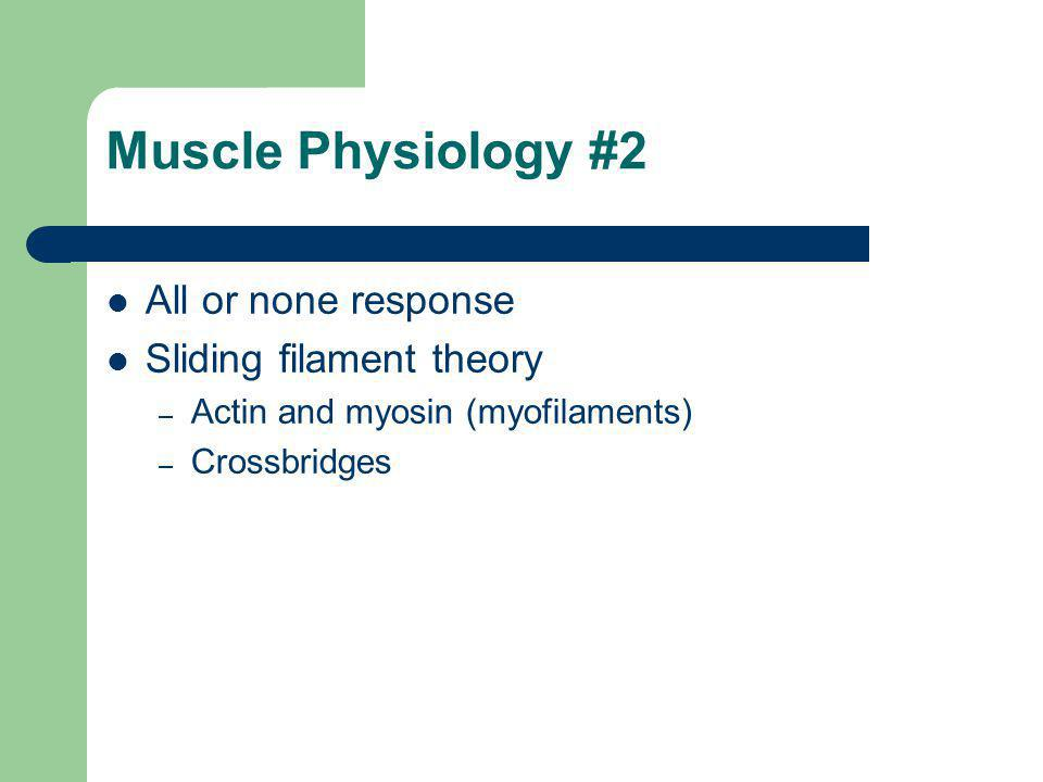 Muscle Physiology #2 All or none response Sliding filament theory