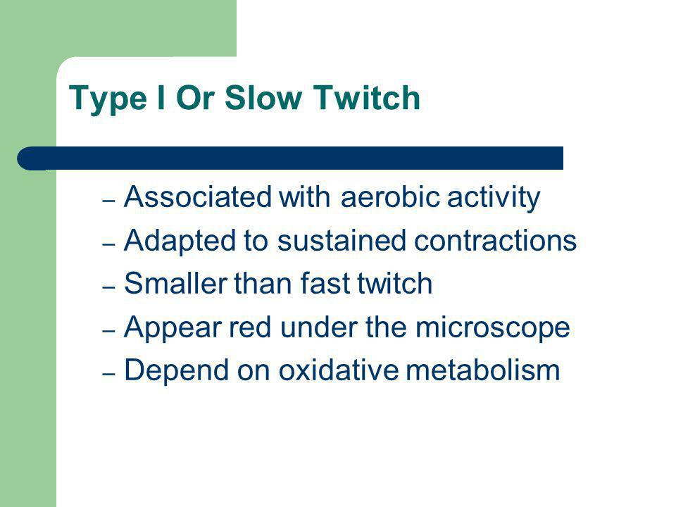Type I Or Slow Twitch Associated with aerobic activity