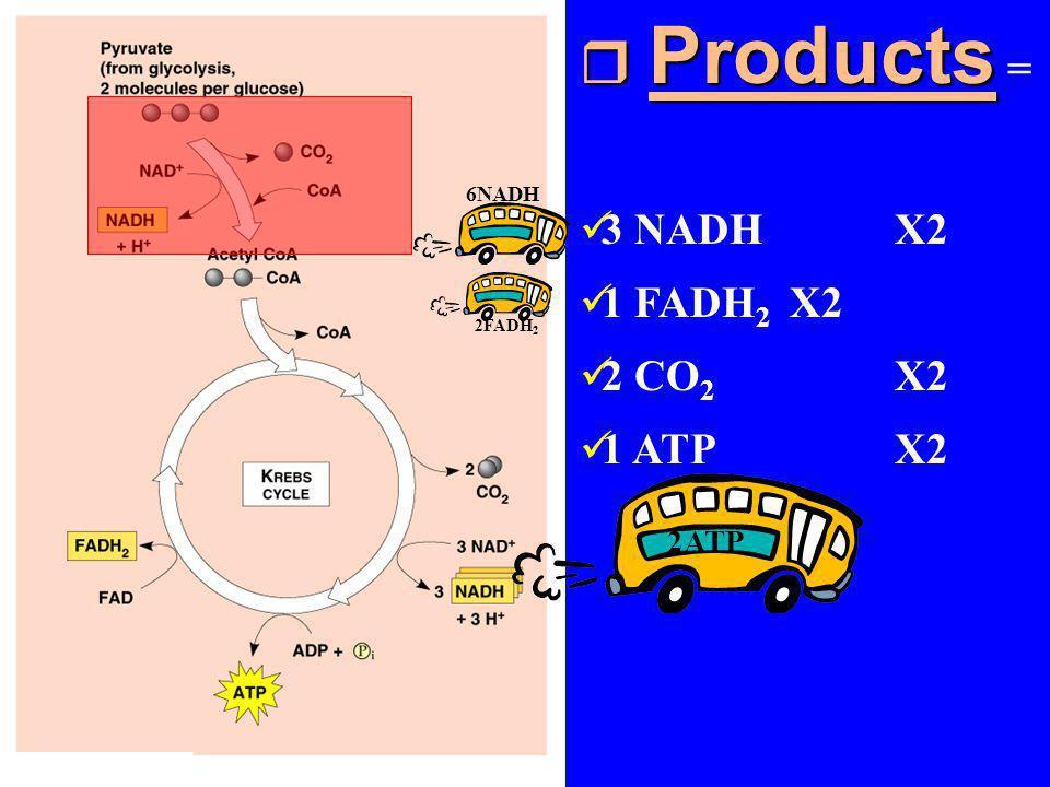 Products = 3 NADH X2 1 FADH2 X2 2 CO2 X2 1 ATP X2 6NADH 2FADH2 2ATP