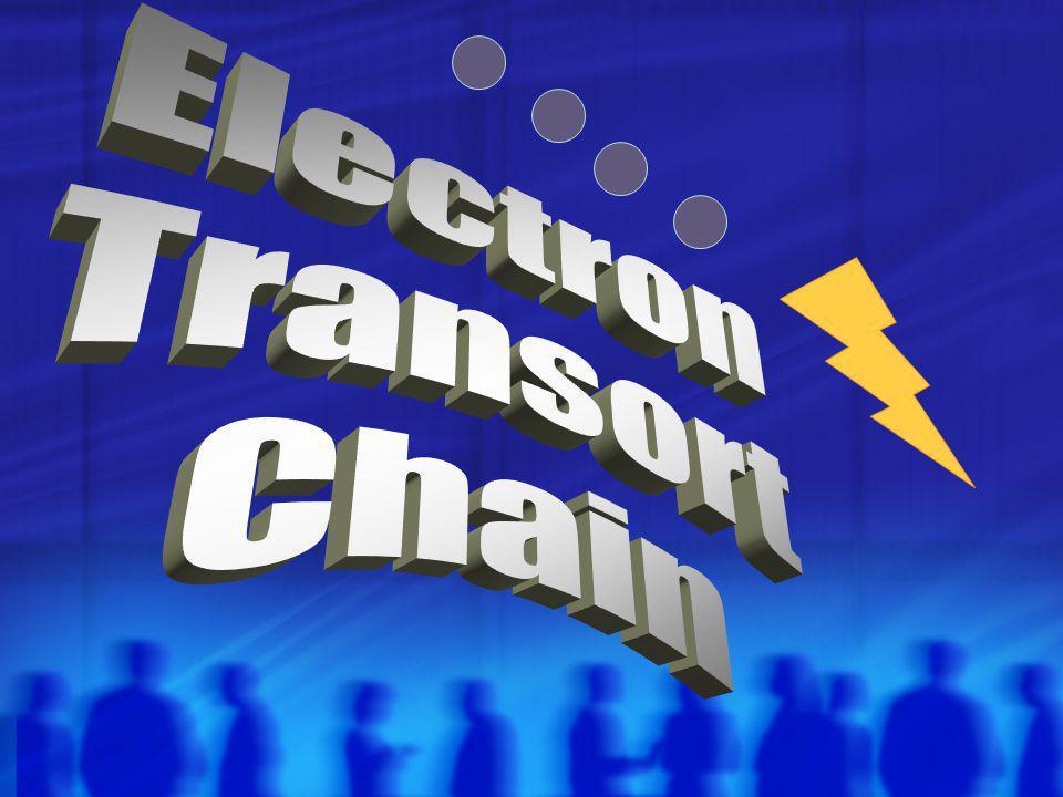 Electron Transort Chain