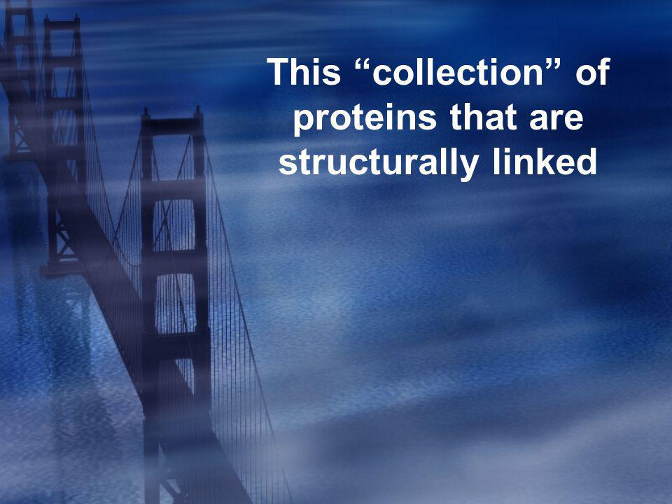 This collection of proteins that are structurally linked