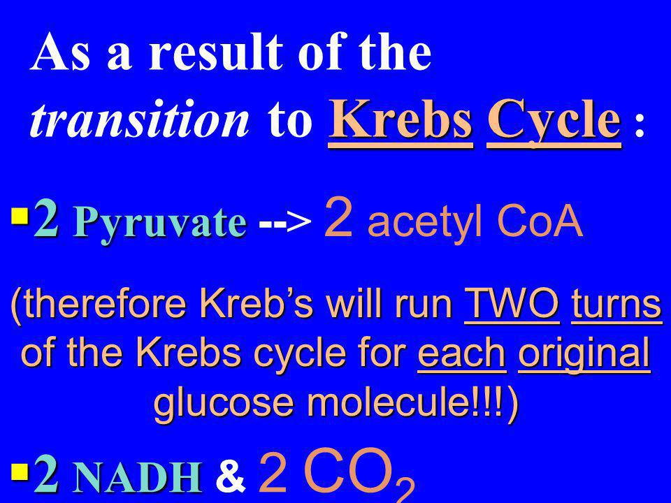 As a result of the transition to Krebs Cycle : The Krebs Cycle: