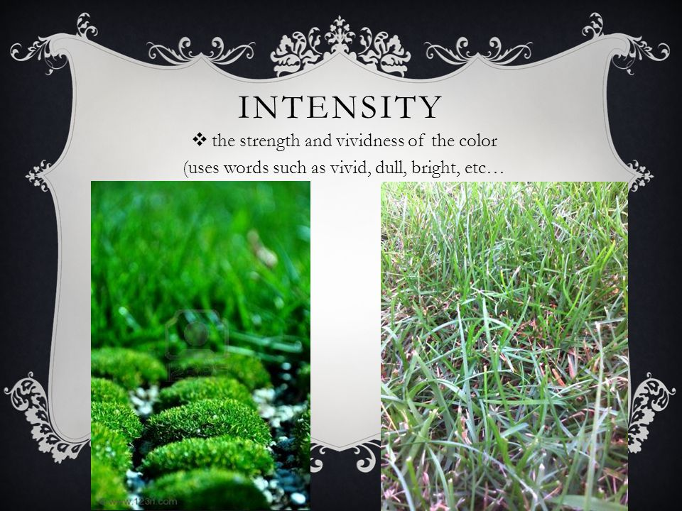 Intensity the strength and vividness of the color