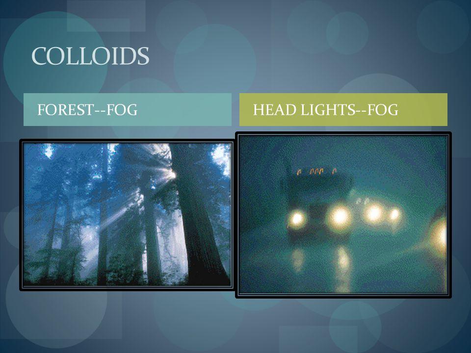 COLLOIDS FOREST--FOG HEAD LIGHTS--FOG