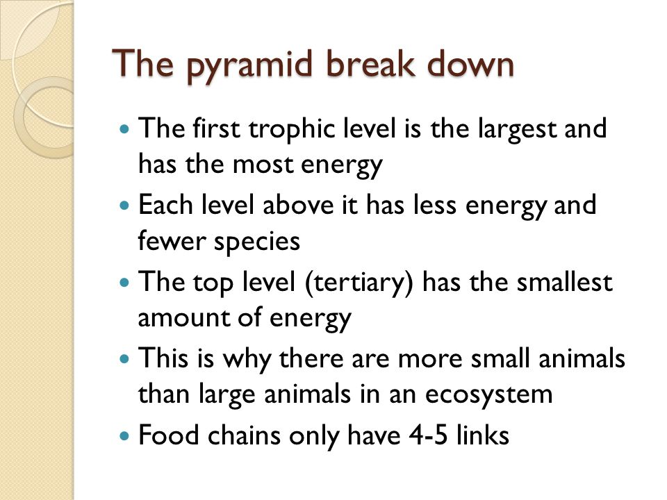 The pyramid break down The first trophic level is the largest and has the most energy. Each level above it has less energy and fewer species.