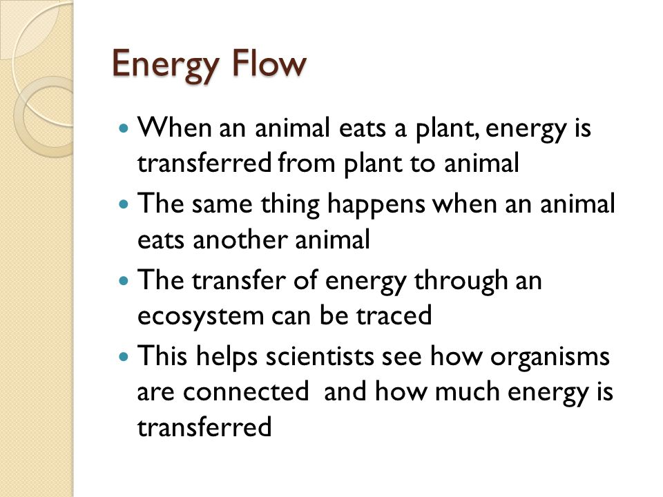Energy Flow When an animal eats a plant, energy is transferred from plant to animal. The same thing happens when an animal eats another animal.
