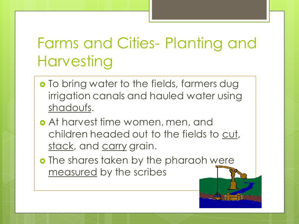 Farms and Cities- Planting and Harvesting