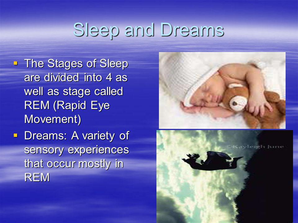 Sleep and Dreams The Stages of Sleep are divided into 4 as well as stage called REM (Rapid Eye Movement)