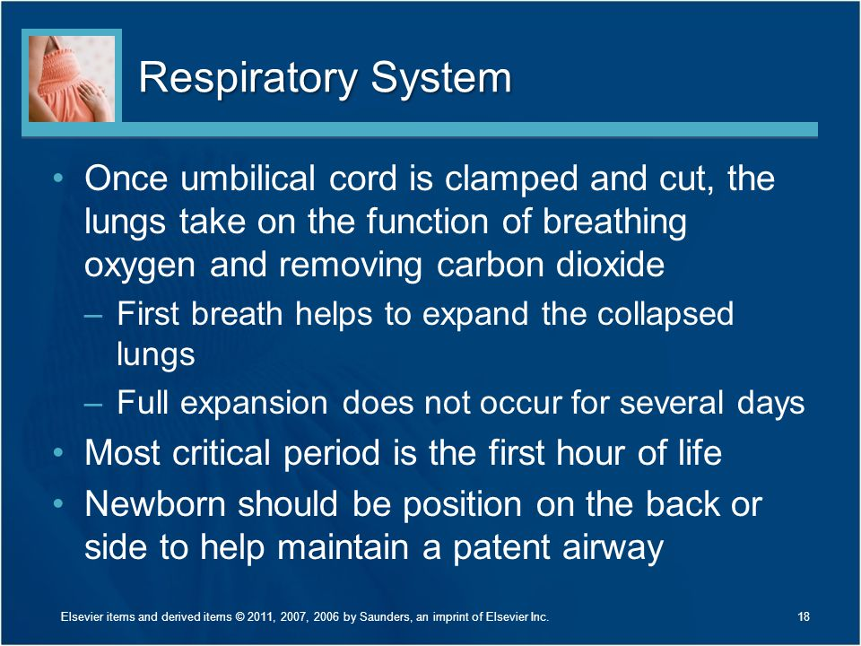 Respiratory System Once umbilical cord is clamped and cut, the lungs take on the function of breathing oxygen and removing carbon dioxide.