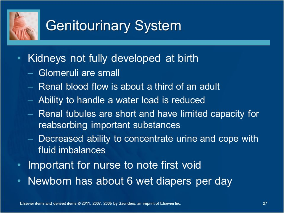 Genitourinary System Kidneys not fully developed at birth