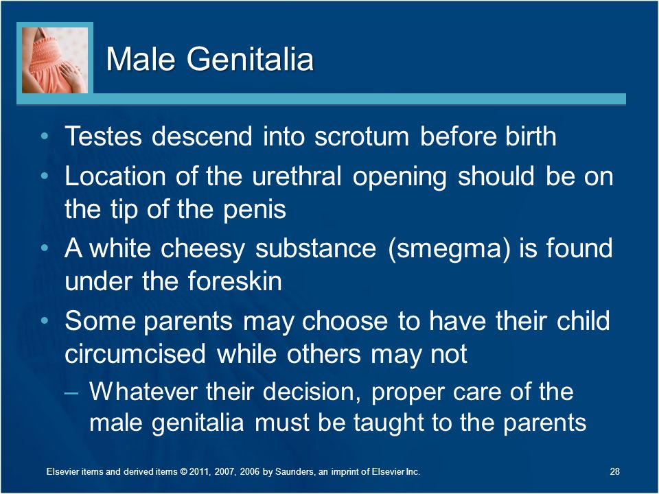 Male Genitalia Testes descend into scrotum before birth