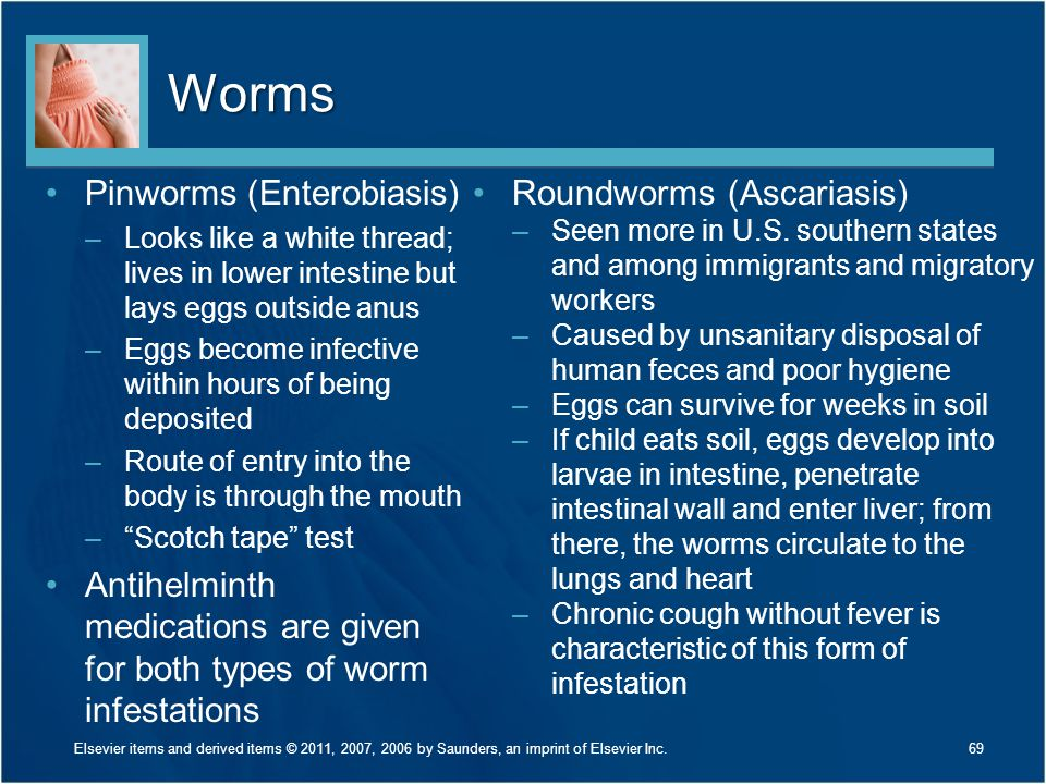 Worms Pinworms (Enterobiasis)