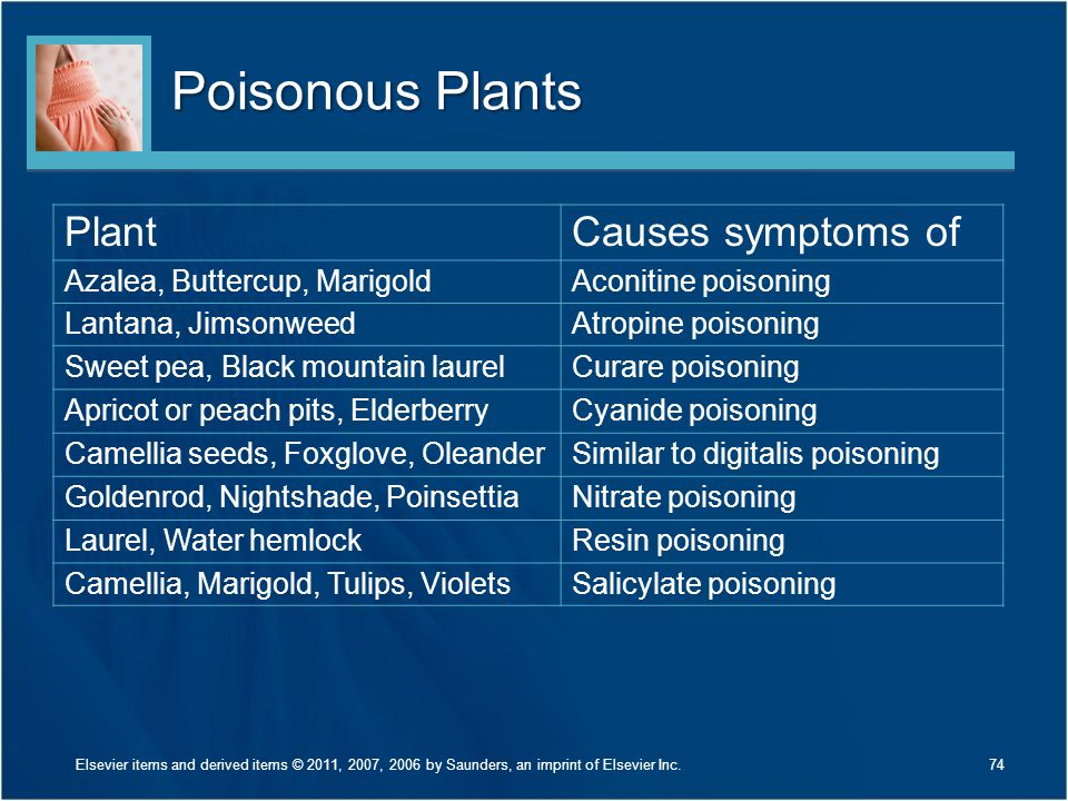 Poisonous Plants Plant Causes symptoms of Azalea, Buttercup, Marigold