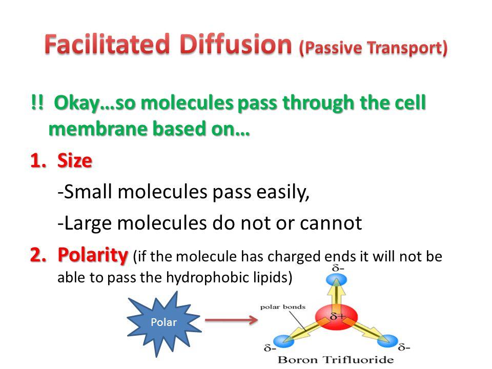 Facilitated Diffusion (Passive Transport)
