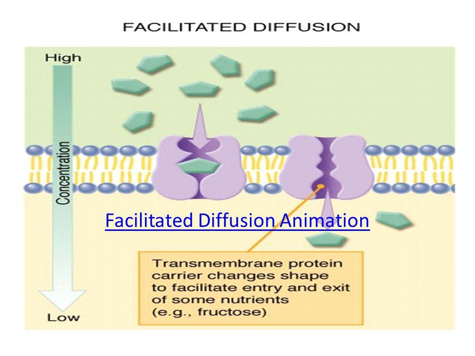 Facilitated Diffusion Animation