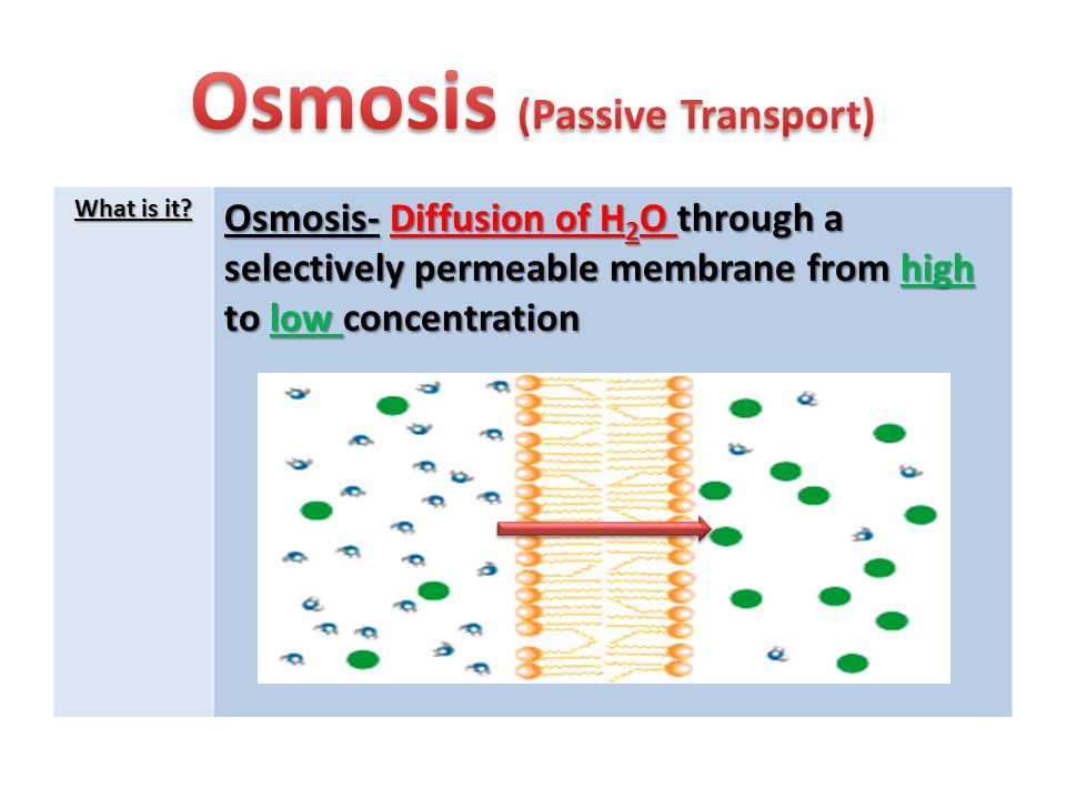 Osmosis (Passive Transport)