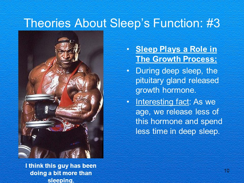 Theories About Sleep's Function: #3