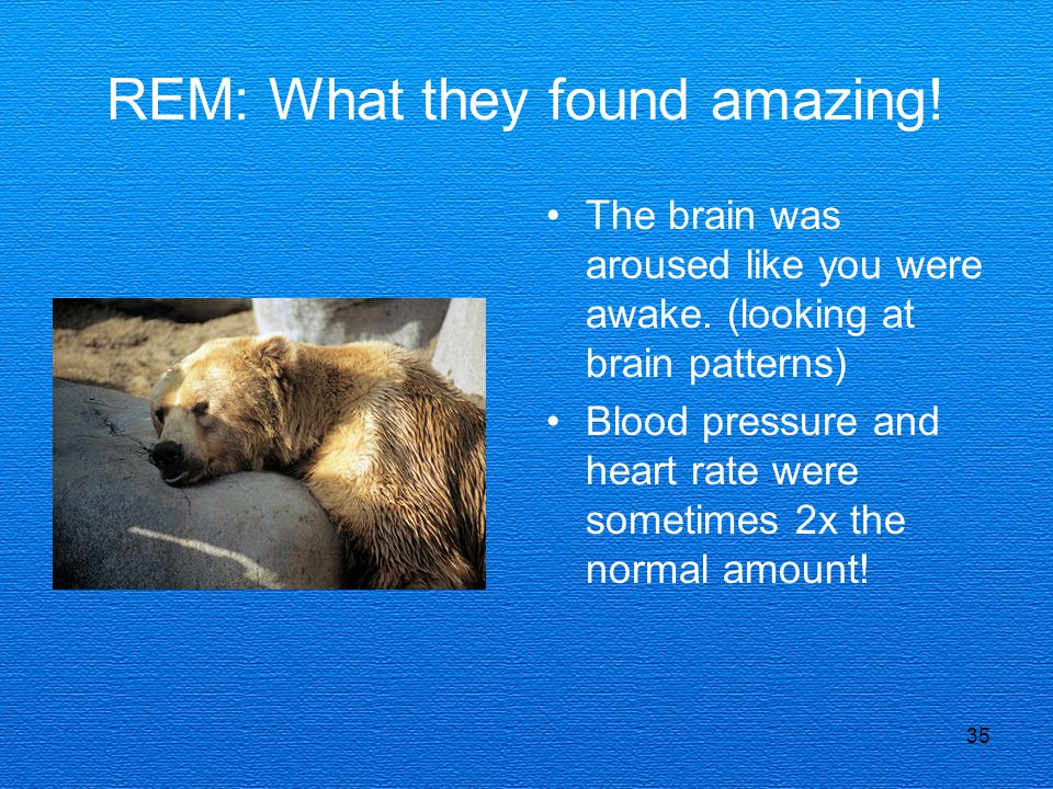 REM: What they found amazing!
