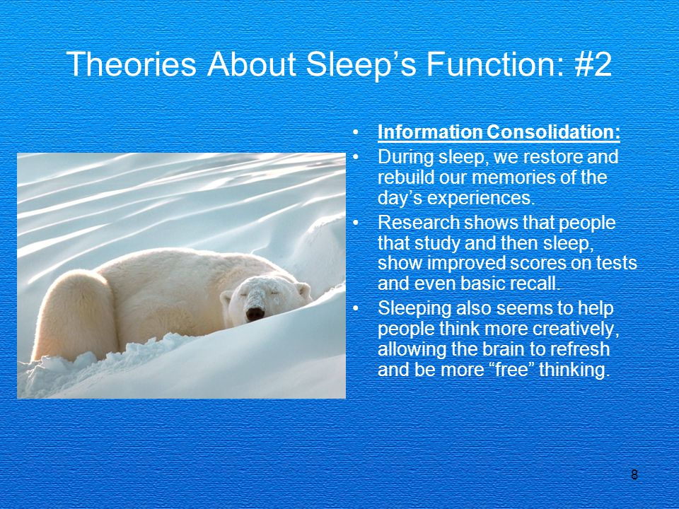 Theories About Sleep's Function: #2