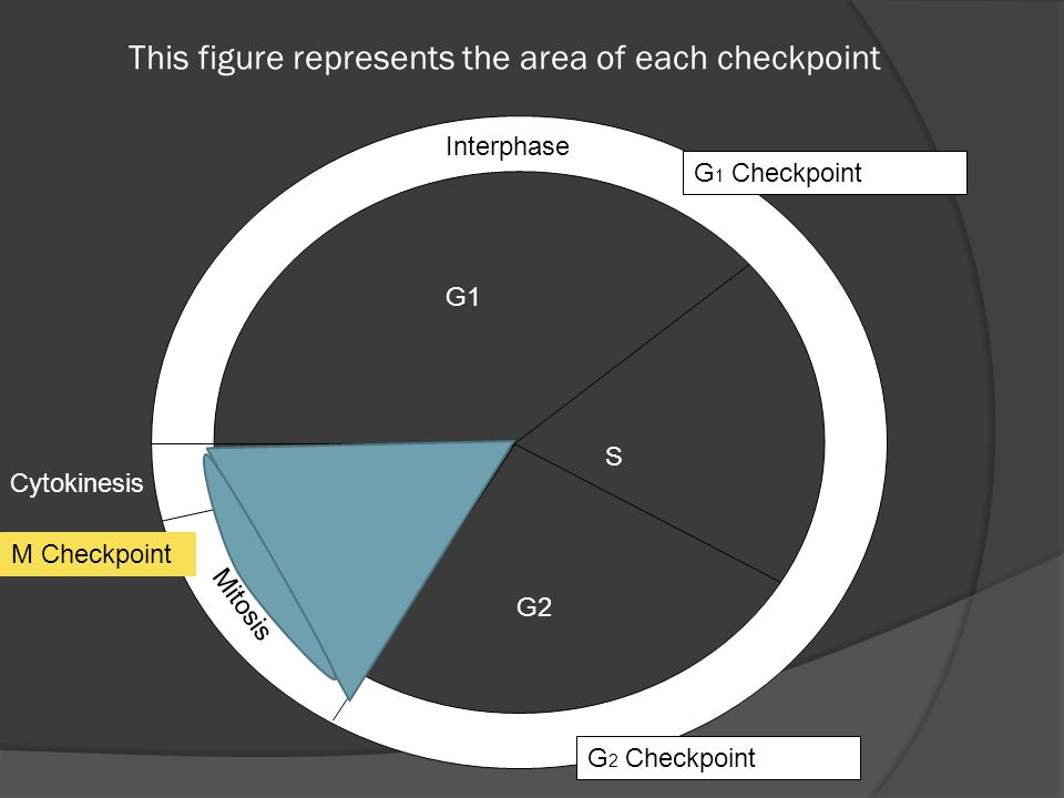 This figure represents the area of each checkpoint