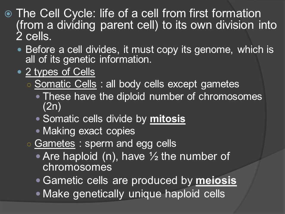 The Cell Cycle: life of a cell from first formation (from a dividing parent cell) to its own division into 2 cells.
