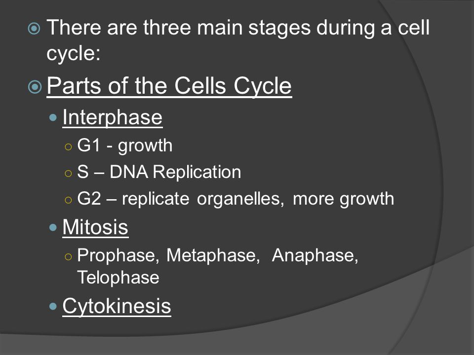Parts of the Cells Cycle