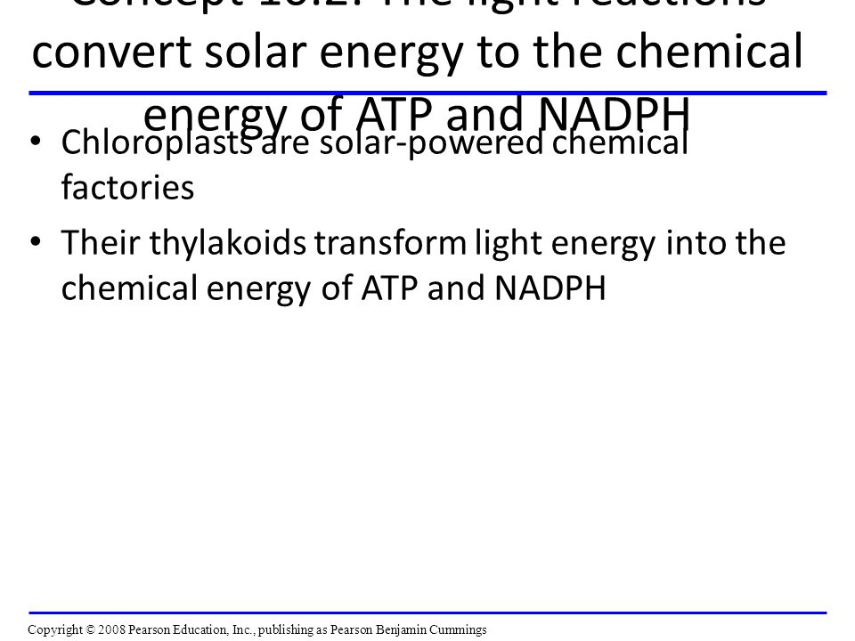 Concept 10.2: The light reactions convert solar energy to the chemical energy of ATP and NADPH