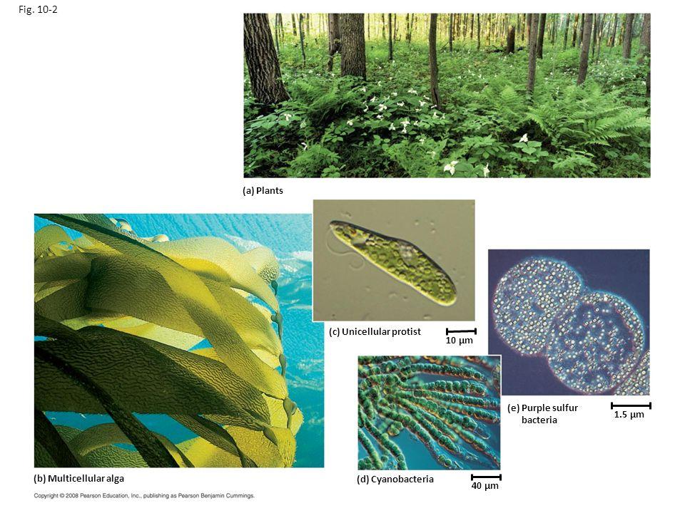 Fig. 10-2 (a) Plants Figure 10.2 Photoautotrophs