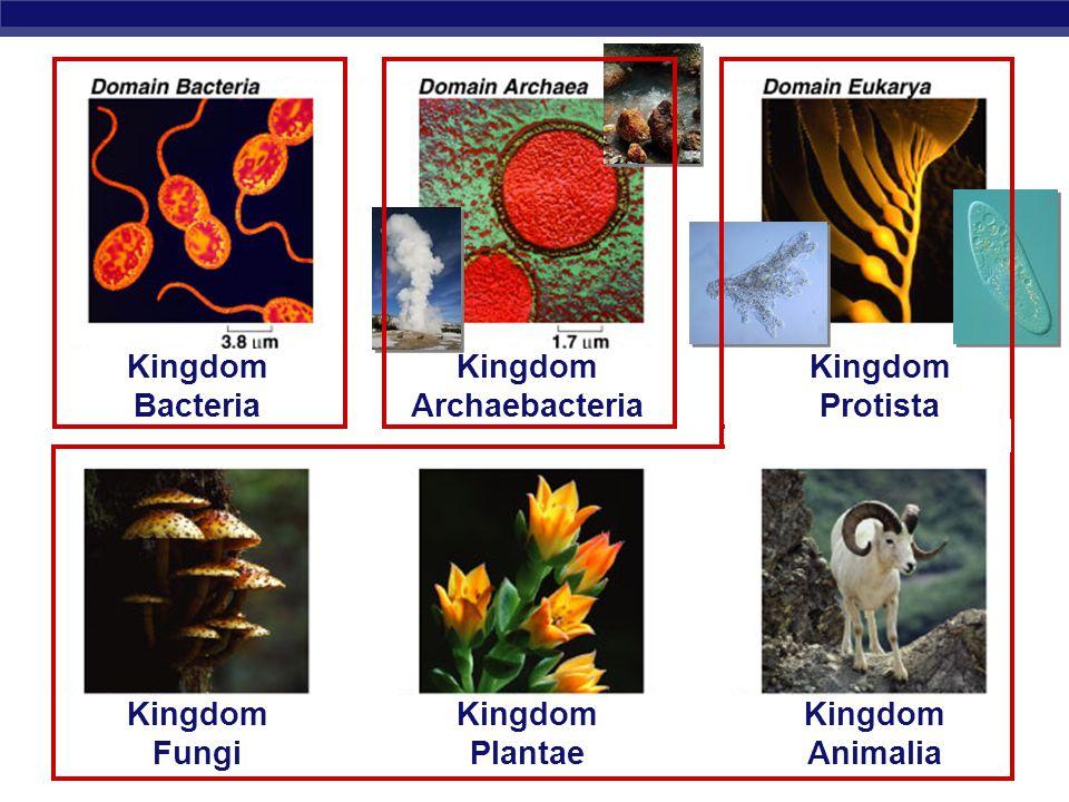 Kingdom Archaebacteria