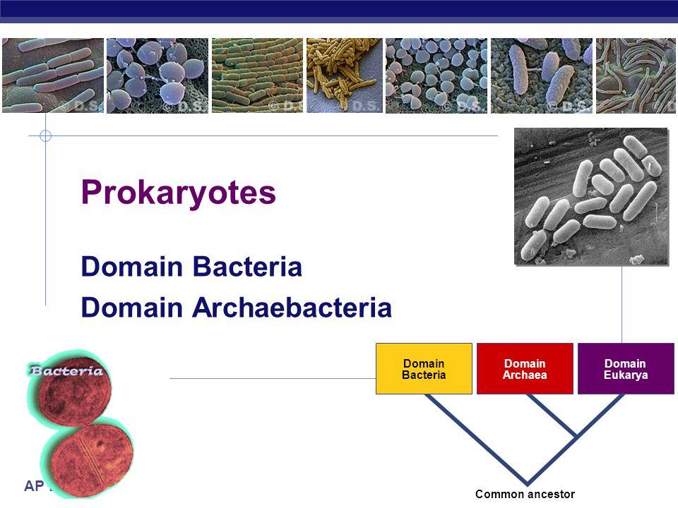 Domain Bacteria Domain Archaebacteria