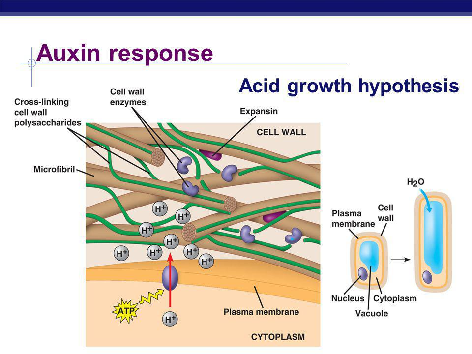 Auxin response Acid growth hypothesis