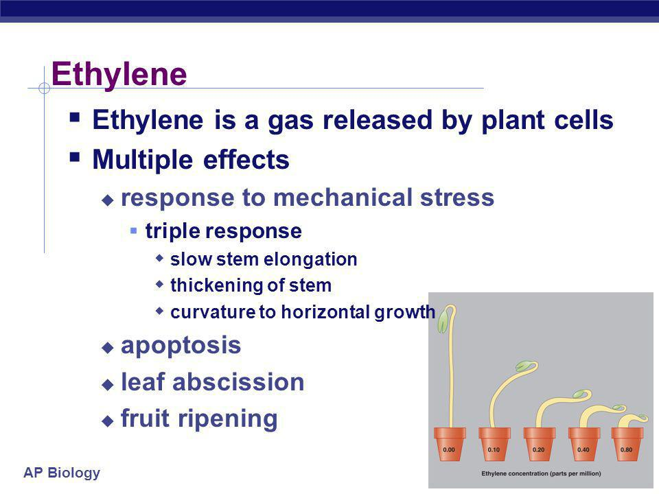 Ethylene Ethylene is a gas released by plant cells Multiple effects